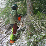 link to forestry services