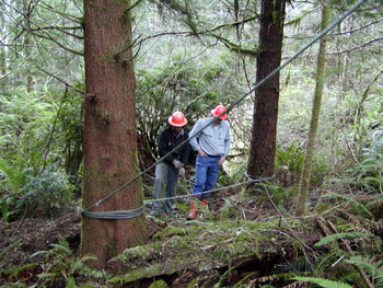 Loggers using synthetic rope guylines