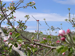 Yakima valley orchard in bloom by Stacey Holland