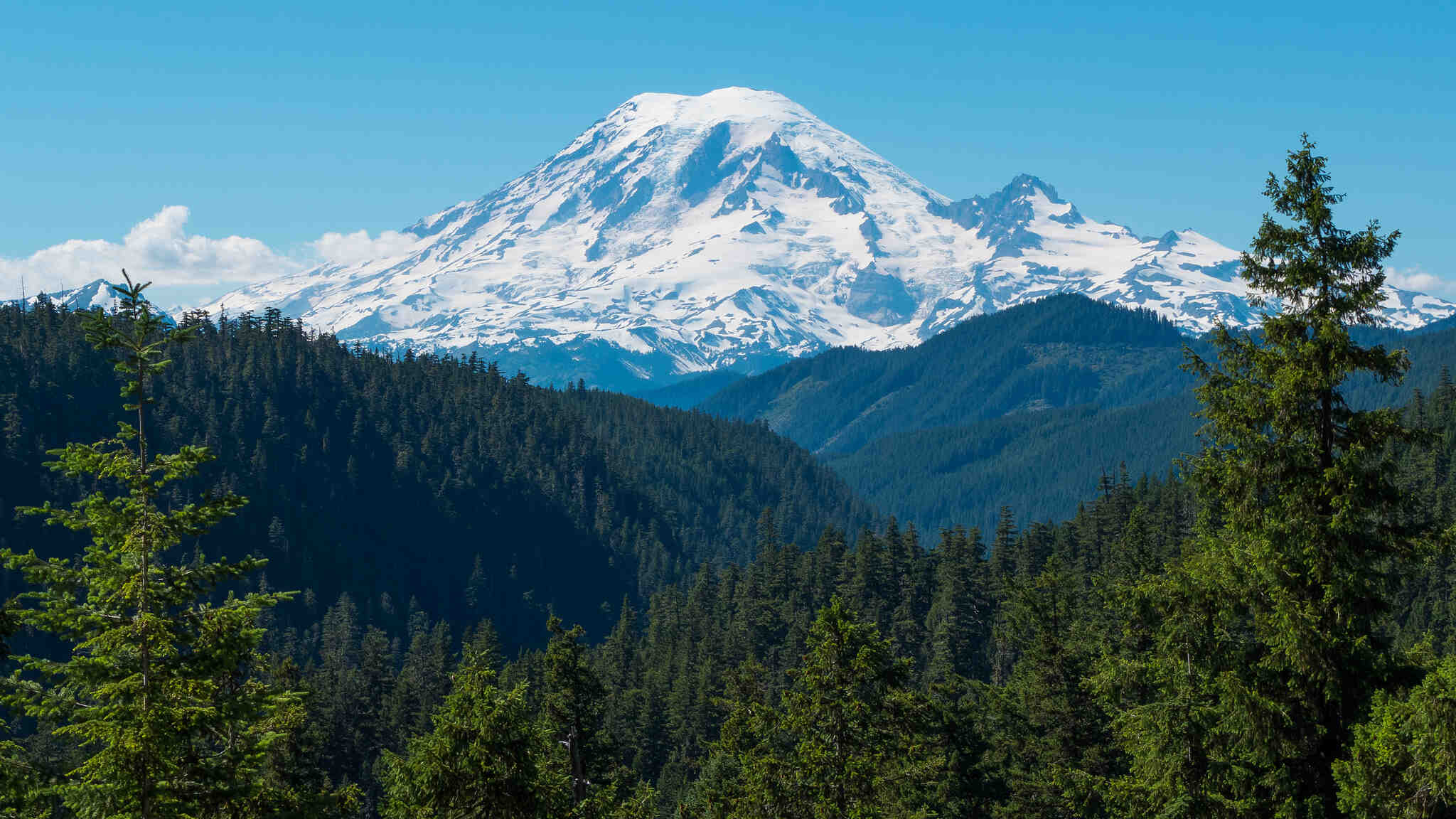 View of a forested landscape with Mount Rainier in the background.
