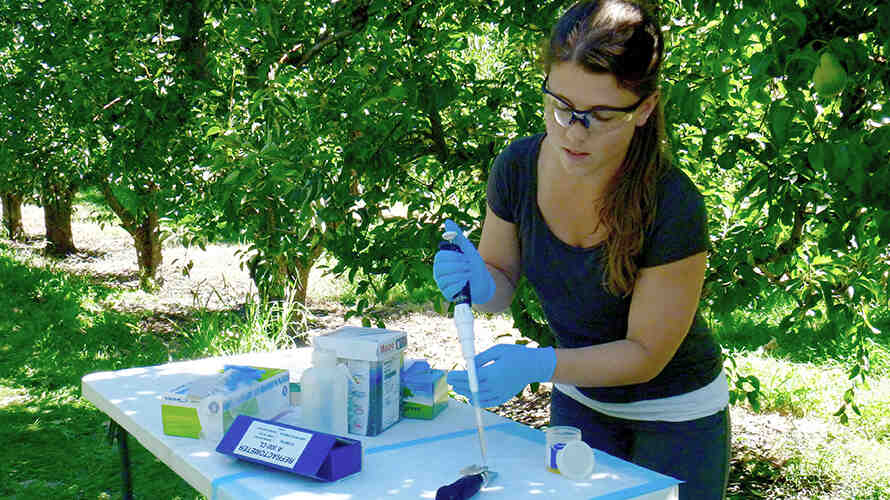 Miriam Caulkins tests samples on-site in an orchard.  Photo: Jose Carmona.