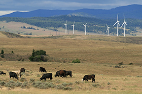 Photo of eastern washington field with cows grazing and windmills in the background.