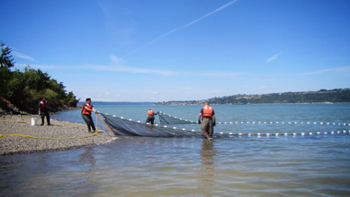 Scientists sample at one of the sites in south Puget Sound.