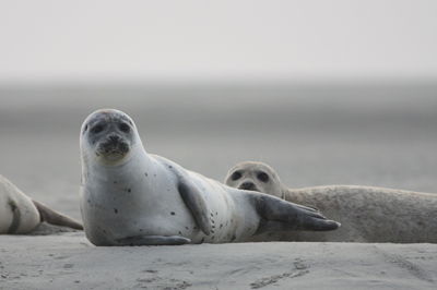 Seals on a beach.
