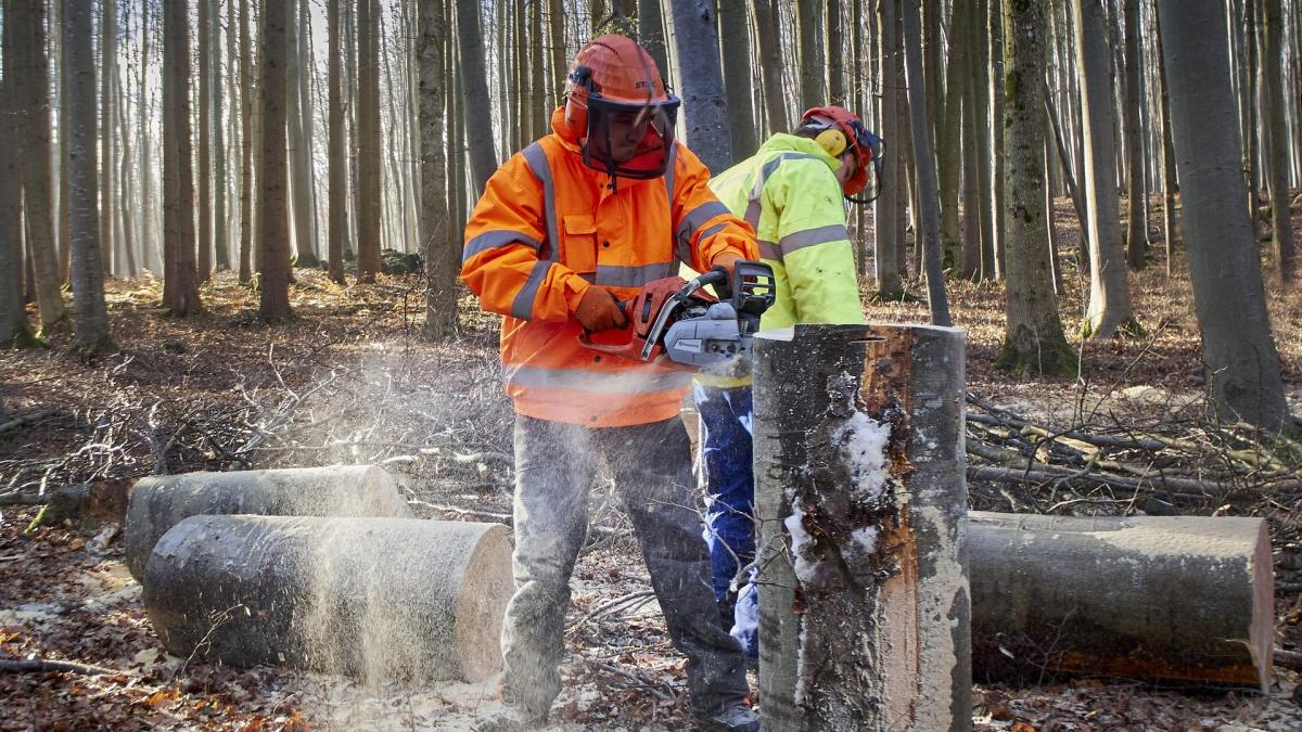 Two forest workers in a forest, one in the foreground cutting a tree trunk with a chainsaw wearing a helmet, ear protection, safety visor, orange vest and gloves.