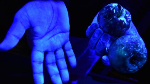 Two hands holding an apple under blue light showing traces of pesticide.