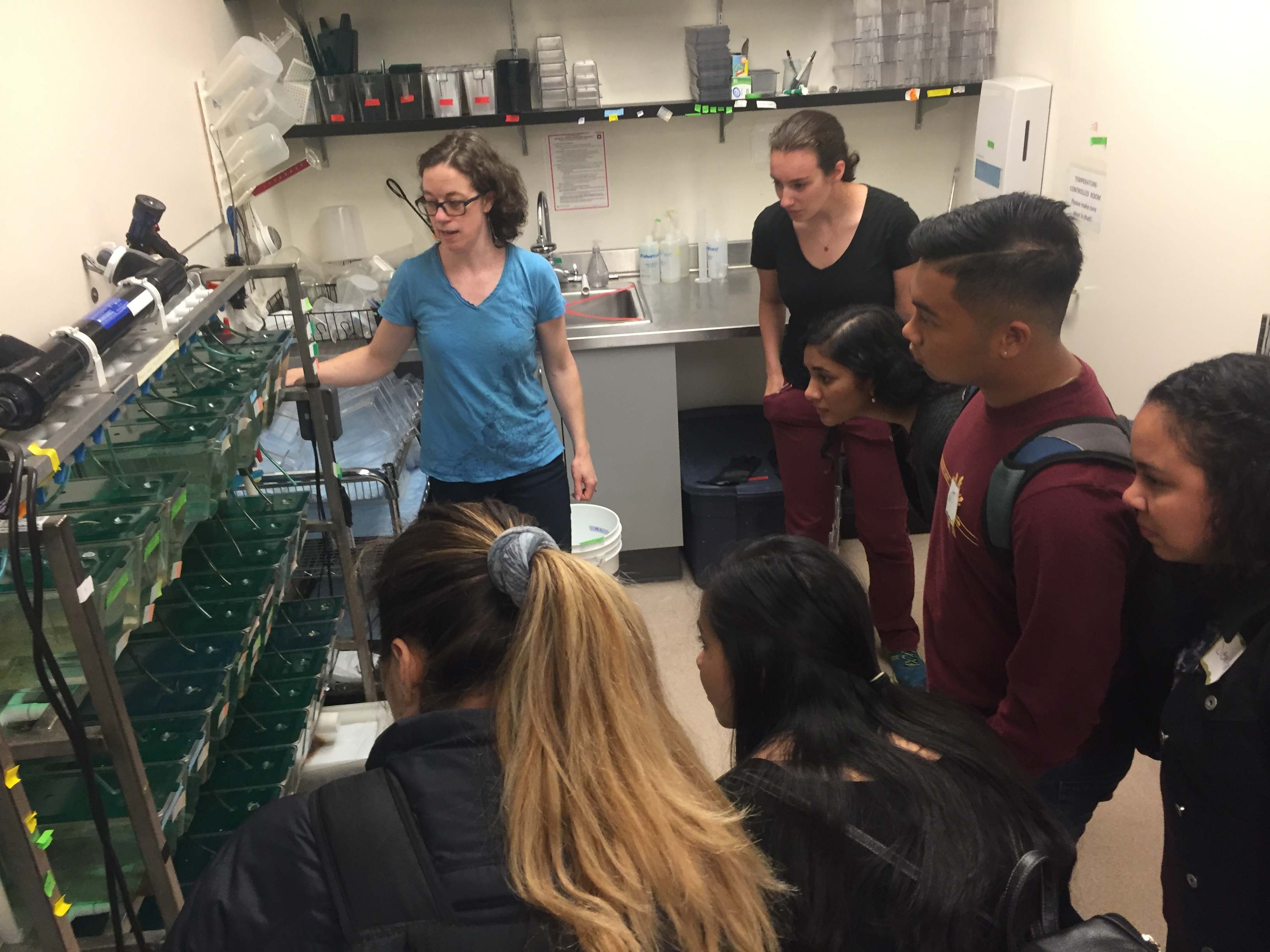 Postdoctoral researcher, Margaret Mills, shows off tanks of zebrafish in the Gallagher lab.