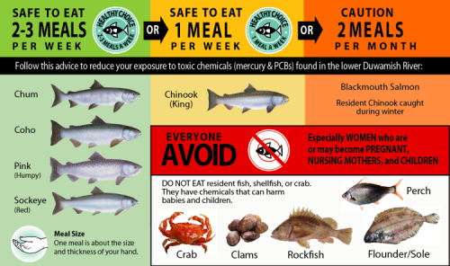 Graphic of an advisory showing which Duwamish River seafood to avoid and which should be consumed in limited amounts