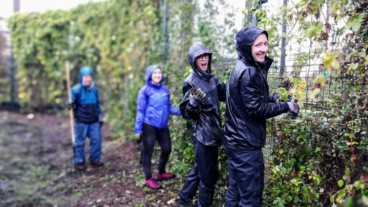 Four volunteers work in raingear on a fence entwined by vines